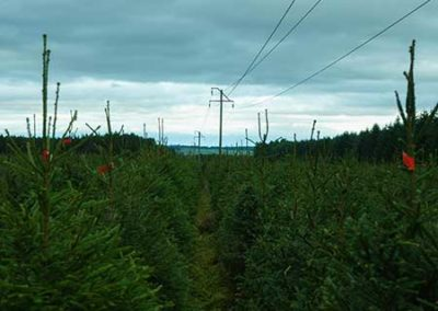 Pictures-Spruce